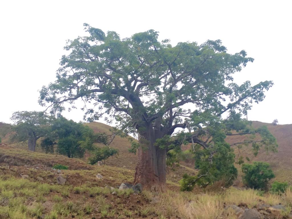 f:id:baobab-no-ki:20170405022428j:plain