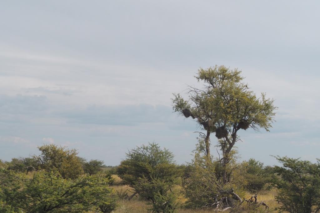 f:id:baobab-no-ki:20170405041055j:plain