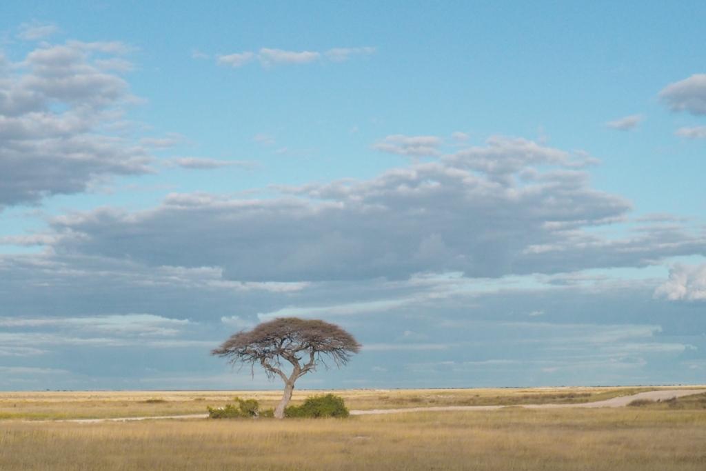 f:id:baobab-no-ki:20170512231138j:plain