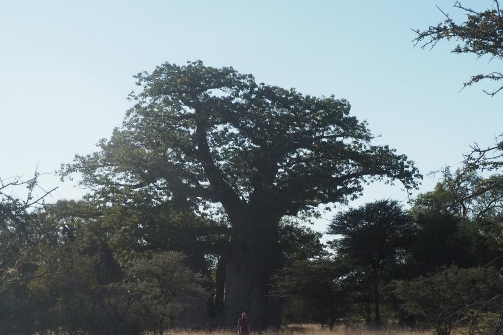 f:id:baobab-no-ki:20170512231523j:plain