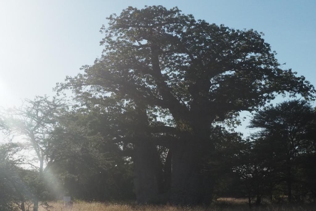 f:id:baobab-no-ki:20170512231547j:plain