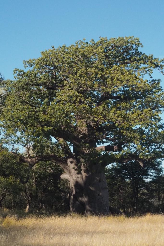 f:id:baobab-no-ki:20170512231618j:plain