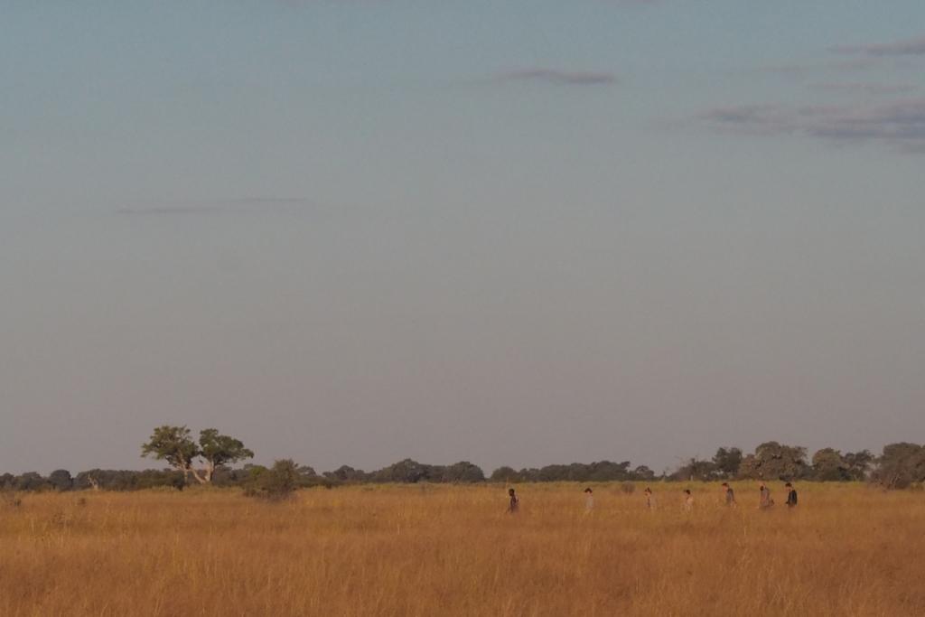 f:id:baobab-no-ki:20170514205826j:plain