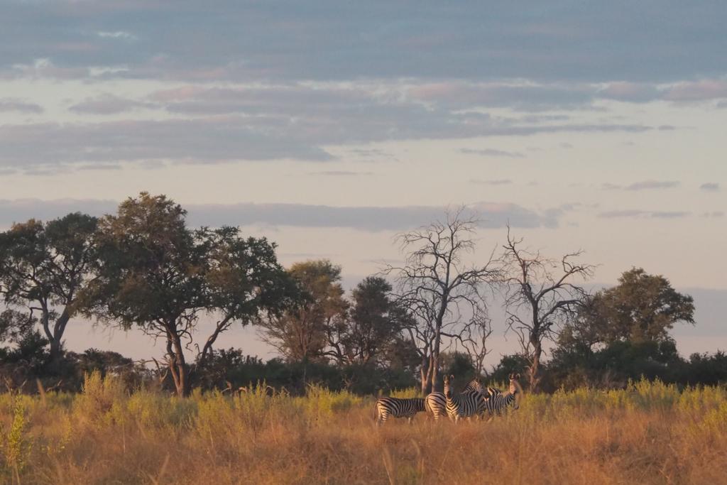f:id:baobab-no-ki:20170514205921j:plain