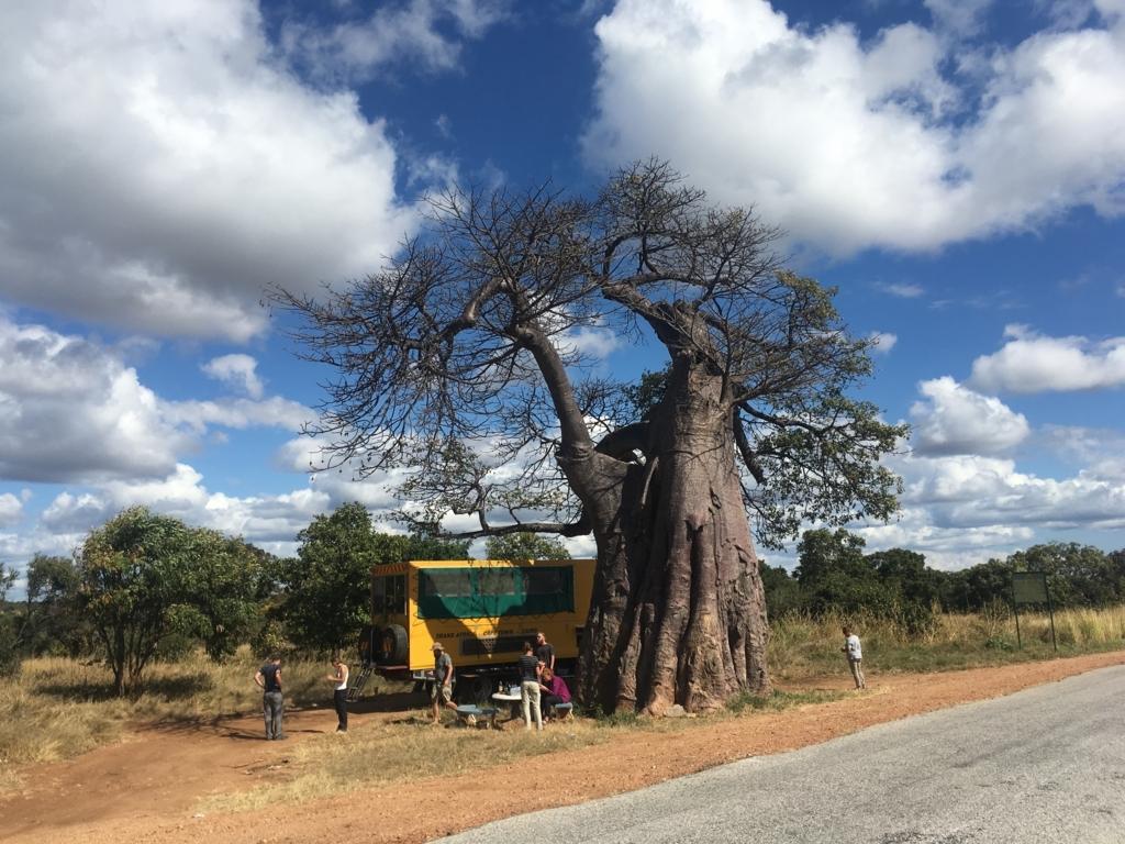 f:id:baobab-no-ki:20170613070500j:plain