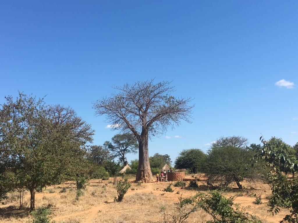 f:id:baobab-no-ki:20170613070539j:plain