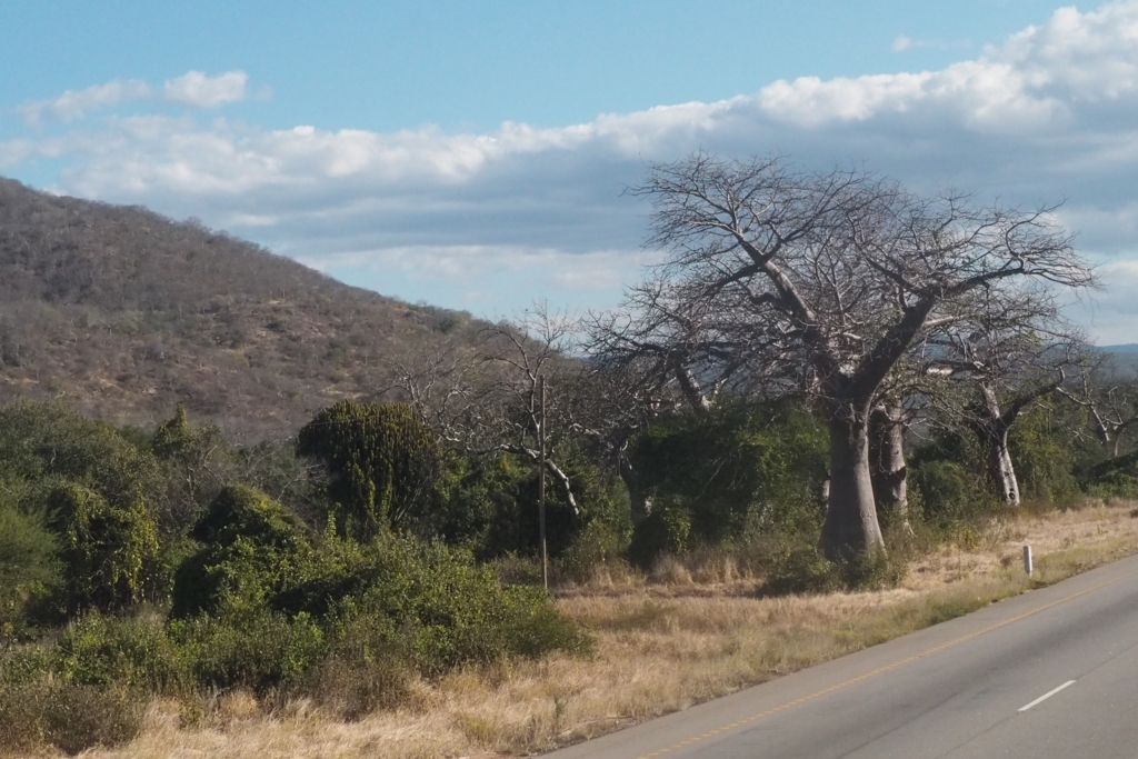 f:id:baobab-no-ki:20170626205428j:plain