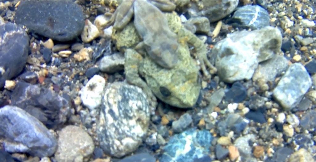 f:id:bassfishingfishing:20210506223225j:image