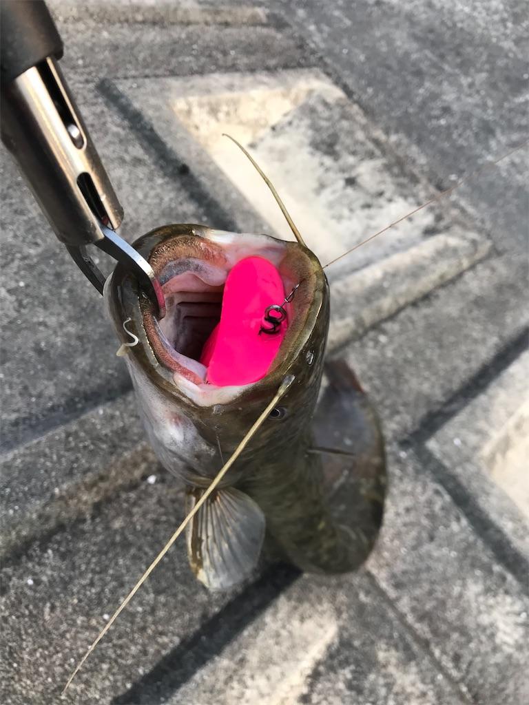 f:id:bassfishingfishing:20210531105518j:image