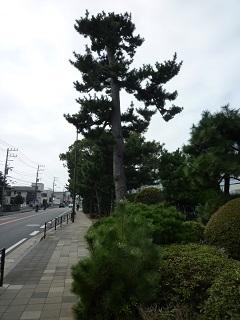 f:id:bata_sun:20161021085704j:plain