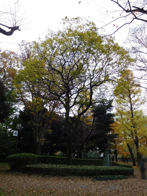 f:id:bata_sun:20161207154254j:plain