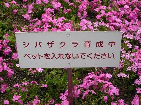 f:id:bata_sun:20170426154514j:plain