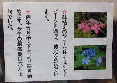 f:id:bata_sun:20170711191909j:plain