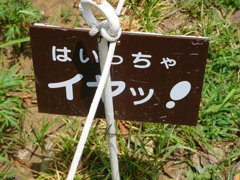 f:id:bata_sun:20170822181817j:plain