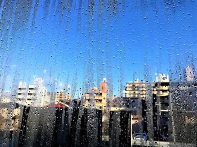 f:id:batabata-kaachan:20200127154203j:plain