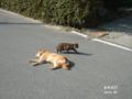 [淡路][猫]On My way