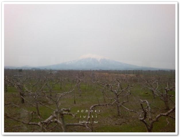 津軽 りんご畑