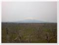[大阪][大川水辺]津軽 りんご畑
