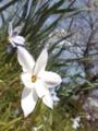 [花][道端]花の花見