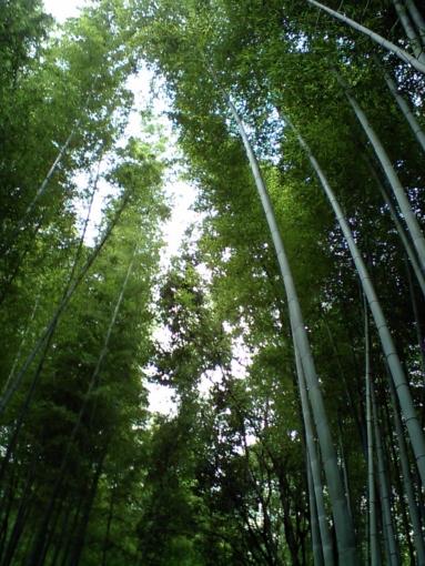 京都嵐山 竹林