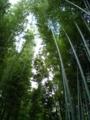 [松尾][嵐山][髪神社][竹林][地蔵][嵯峨野]京都嵐山 竹林
