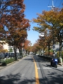 [欅][街路樹][通り][緑][温暖化]欅通り