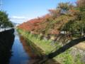 [桜][紅葉][天神]2008 11/12