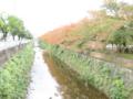 [桜][紅葉][天神]2008 11/9