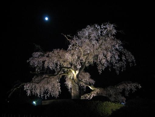 [京都][天神][風景][川面][しだれ桜][円山][東山魁夷]