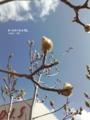 [花][樹木][街路樹]