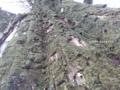 [甍][空][岸辺][塀][吉志部]樹