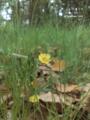 [花][道端]小さな杜のかわいい花