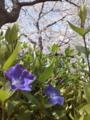 [樹][花][道端][空港][md]主役はワ・タ・シ