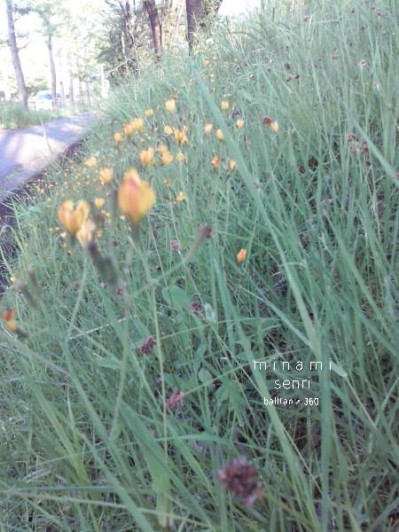 [道草][至福][花][小さい]