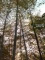 [温泉][竹林][豊中]都会の田園風景