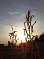 [鉄][Fe][空][欅][竹林][緑地][豊中]夕日