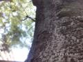 [鉄][Fe][空][欅][竹林][緑地][豊中]欅