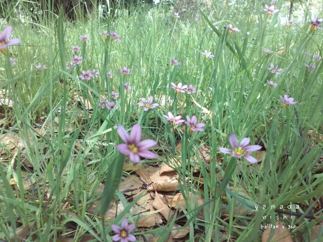 小さな杜のかわいい花