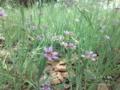 [道草][至福][花][小さい]小さな杜のかわいい花