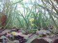[道草][至福][花][小さい]道草