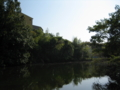 街中の野池