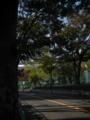 住宅街の欅