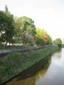 公園の銀杏
