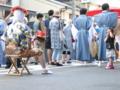 [祇園][2011][gion]ワタシはカメラマンよ!