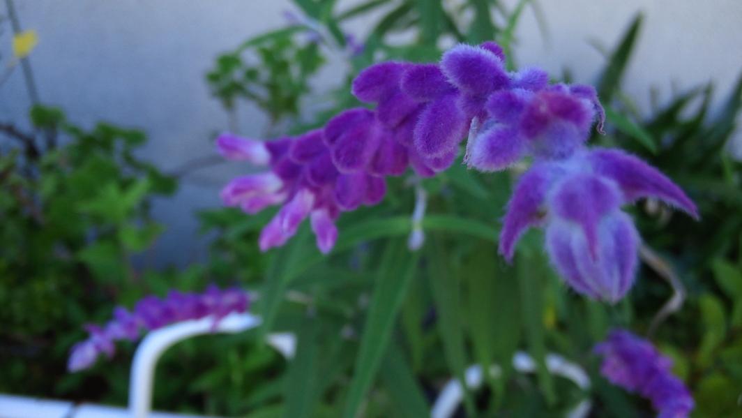 [路傍の花]