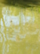 [カワセミ][吹田][野池][南千里]