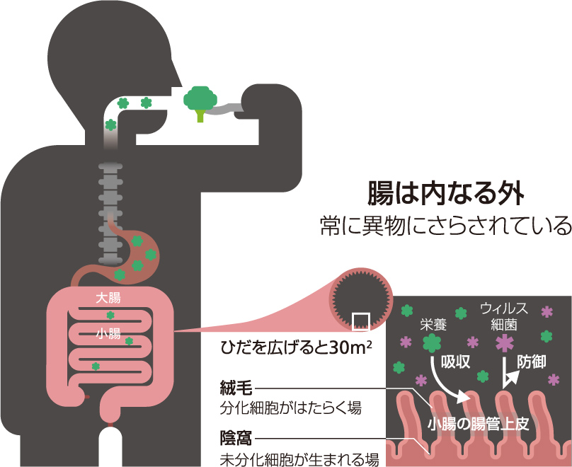 f:id:bayashipapa:20200414100148j:plain
