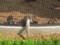 旭山動物園の日本ザル