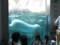 旭山動物園の白熊