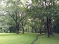 北大植物園のニレの木立